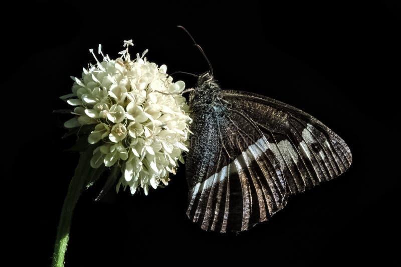 Förhållande mellan en fjäril och en blomma arkivfoton