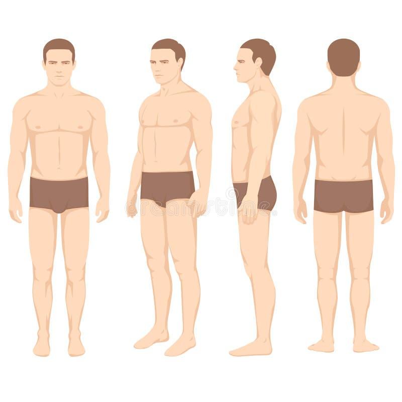 förkroppsliga anatomi, sida för vektormanframdel tillbaka stock illustrationer