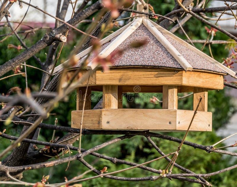 Förlagematare för fåglar på filialen royaltyfria bilder
