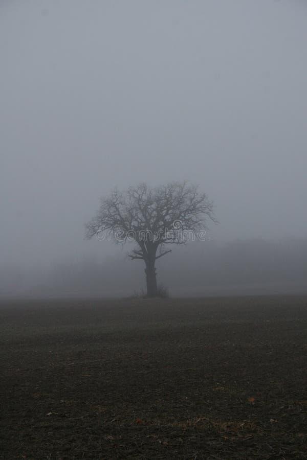 förlorad dimma arkivfoton