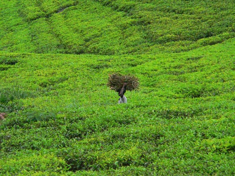 Download Förlorad tea fotografering för bildbyråer. Bild av bära - 982513