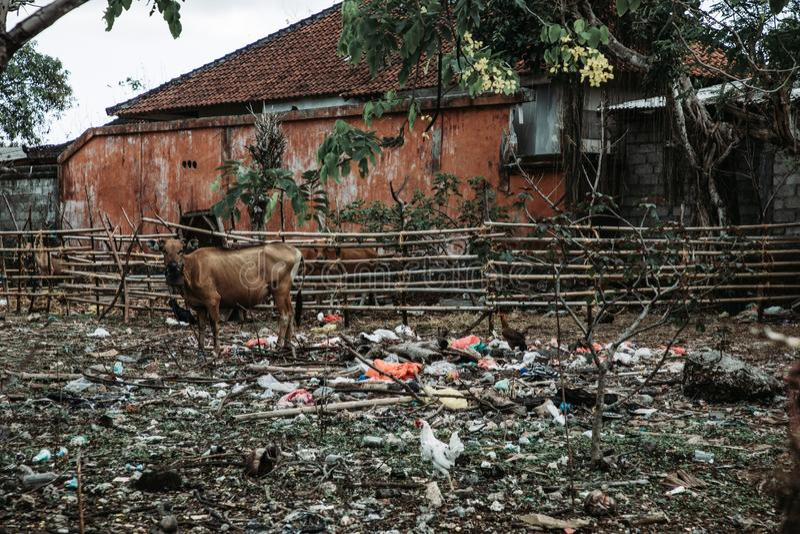 Förorenad lantgård royaltyfri foto