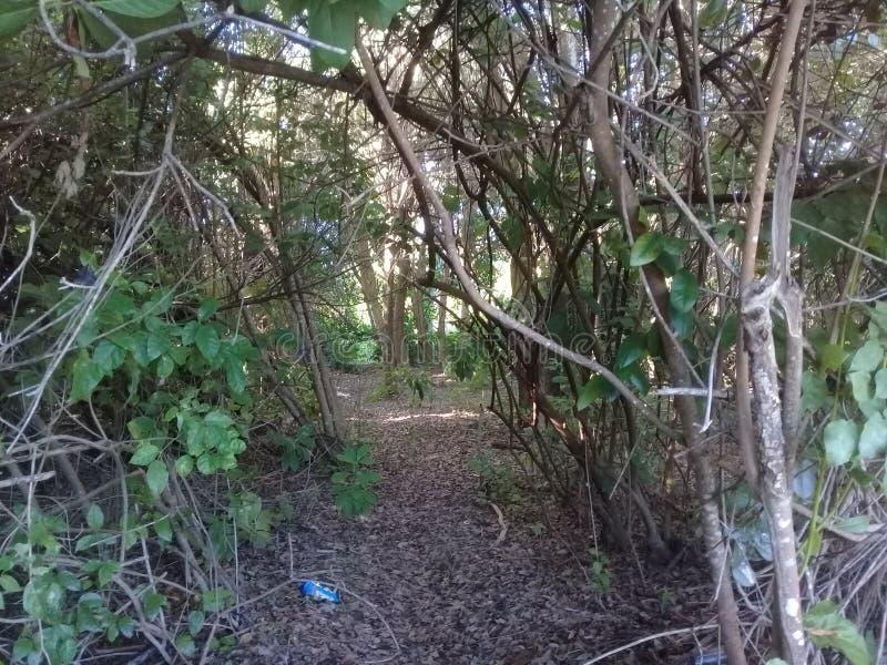 Förorenad mangrove med plast- i Brasilien arkivbild