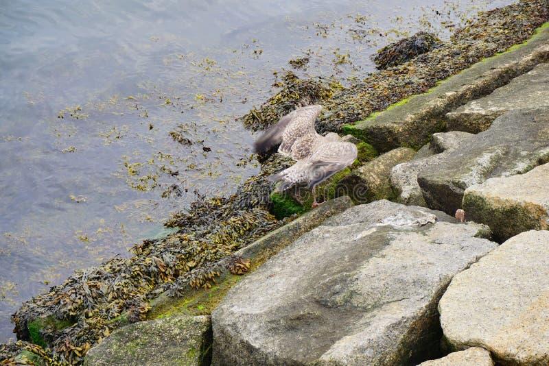 förorenat vatten royaltyfri bild