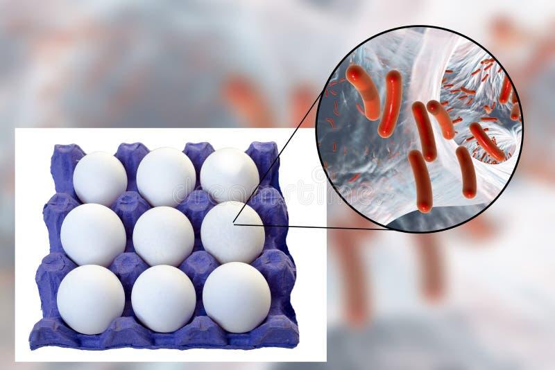 Förorening av ägg med bakterier, medicinskt begrepp för överföringen av matinfektioner till och med ägg royaltyfria bilder