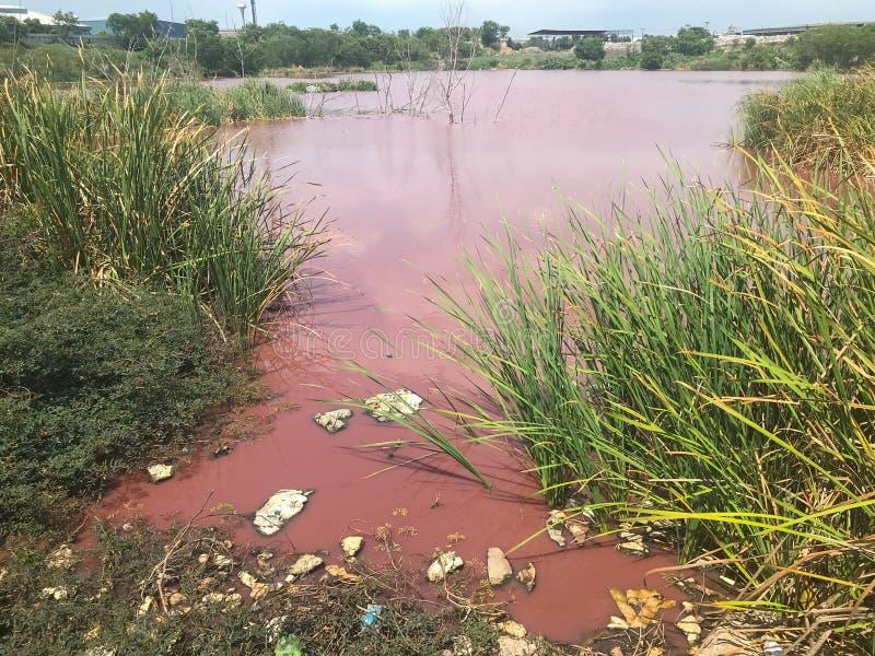 Förorening av det stora rosa dammet nära den kemiska industrianläggningen royaltyfria bilder