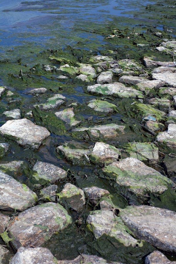 Föroreningflod royaltyfria foton