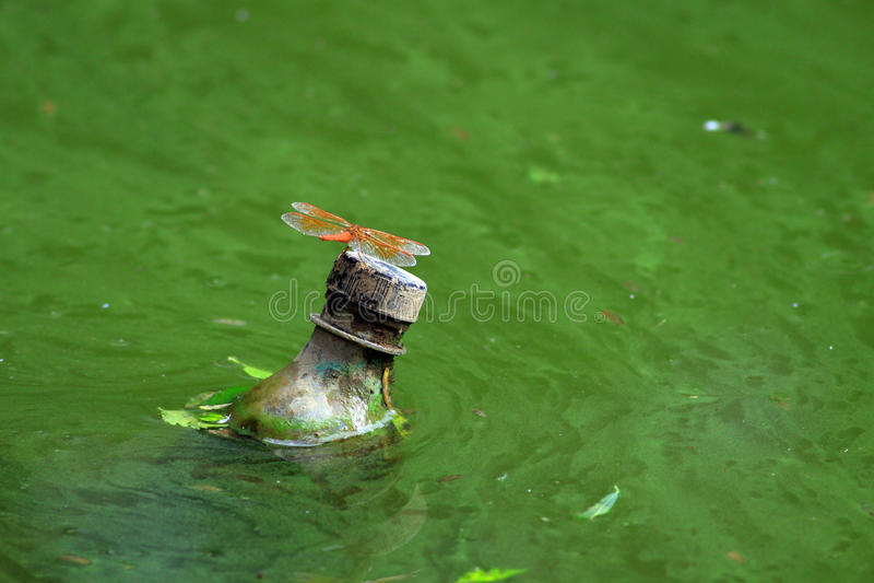 föroreningvatten royaltyfria foton
