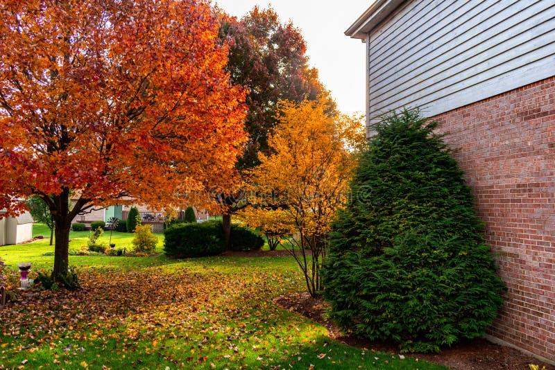 Förorts- hem- trädgårdträdgård under höst arkivfoto