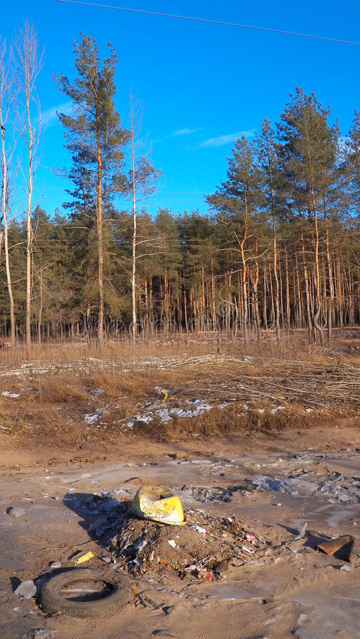 Förrådsplats på skogbakgrunden arkivfoto