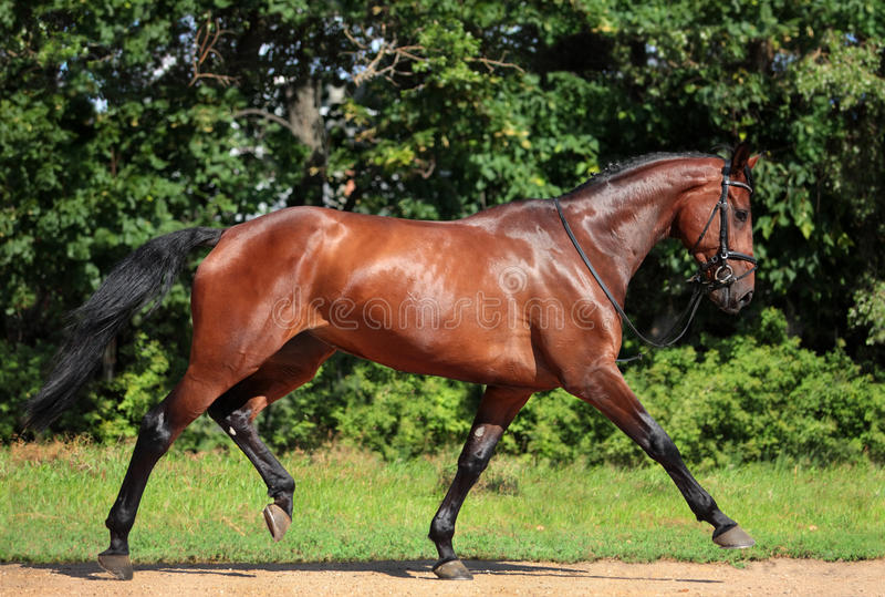 Förrymd häst arkivfoton