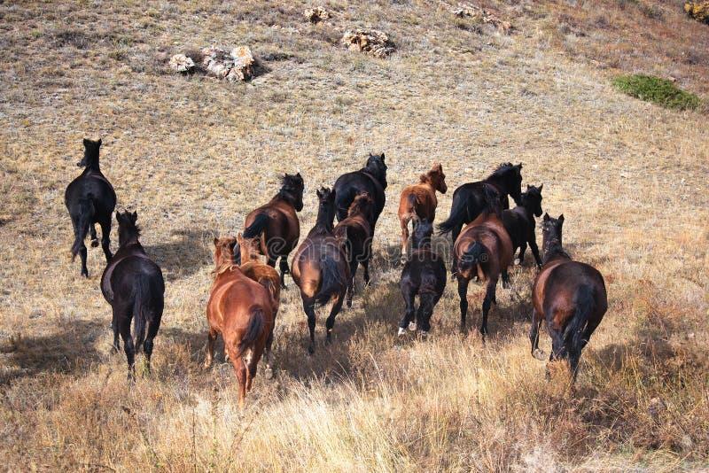 förrymda hästar arkivbild