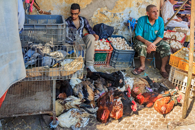 Försäljare som säljer levande höna, duvor och ägg på marockanska mars royaltyfria bilder