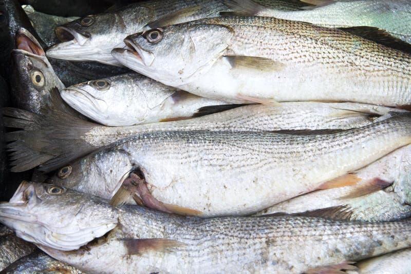 försäljning för 3 fisk royaltyfri bild
