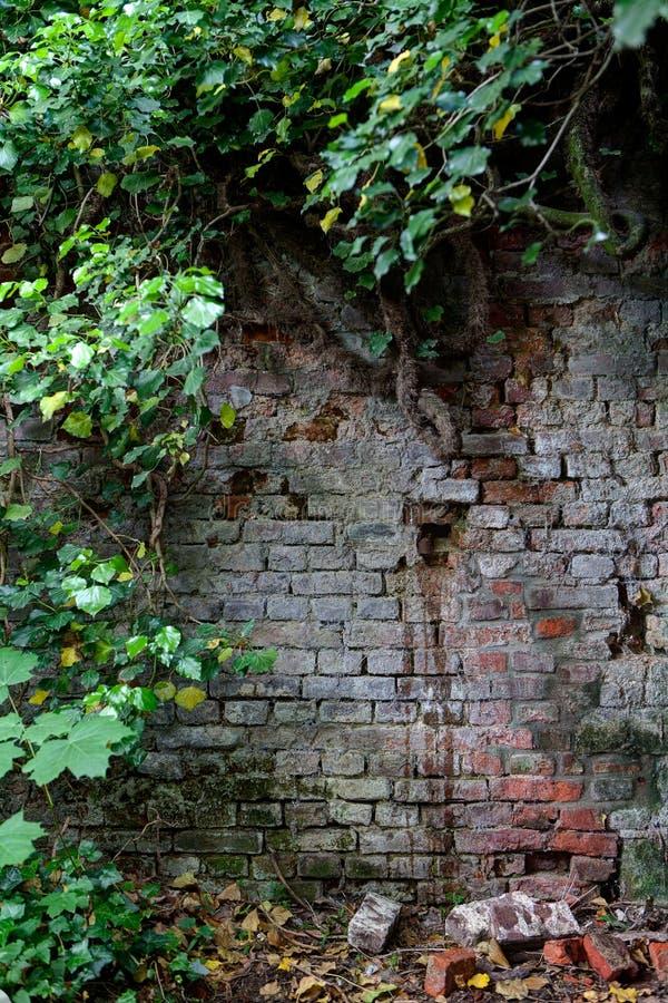 Försämras natur för tegelstenvägg, Leuven, Belgien arkivfoto