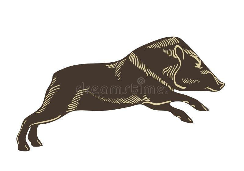 Försedd med krage navelsvinvektor Vildsvinillustration Hand dragen bild som isoleras på wightebakgrund stock illustrationer