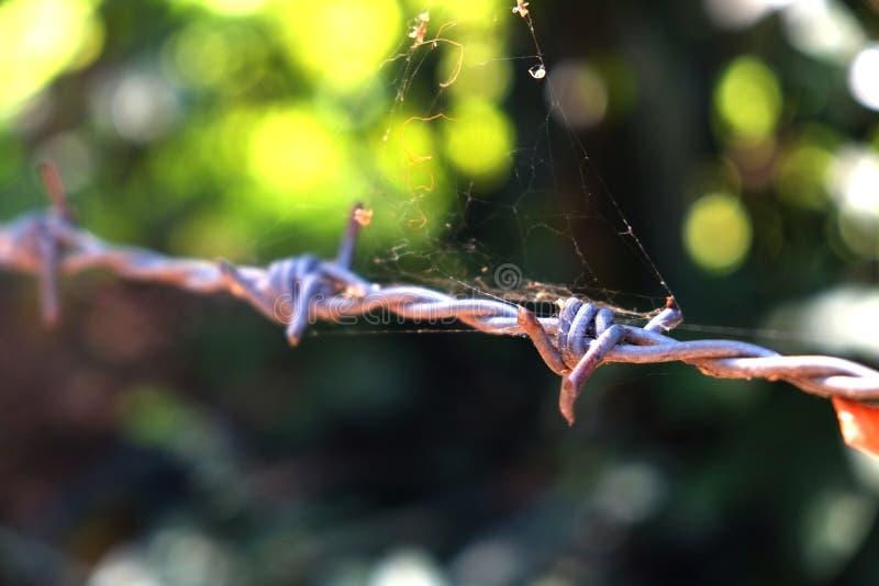 Försett med en hulling - tråd med spindelrengöringsduk arkivfoto
