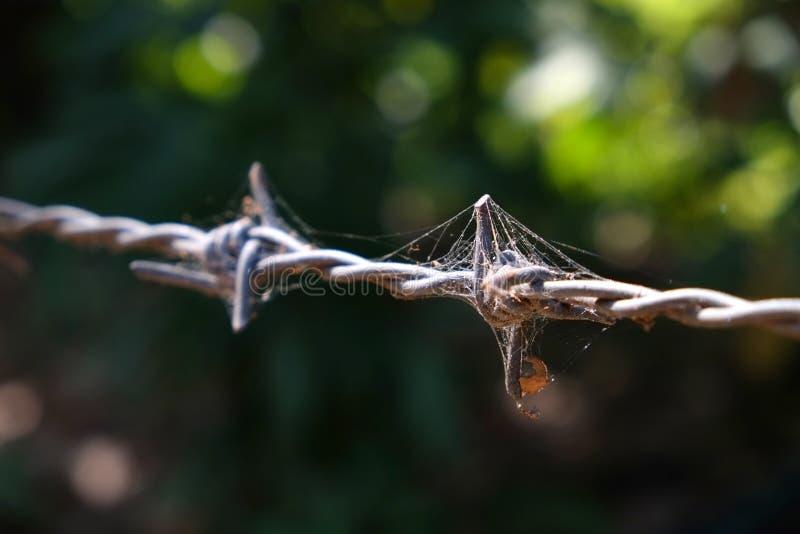 Försett med en hulling - tråd med spindelrengöringsduk royaltyfri fotografi