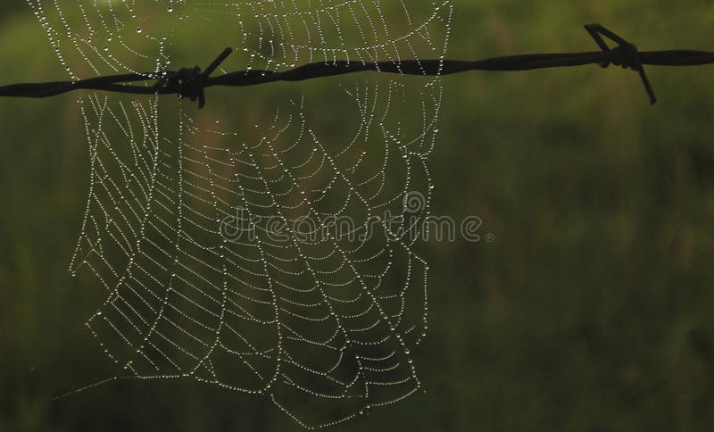 Försett med en hulling - tråd med våt spindelrengöringsduk royaltyfria bilder