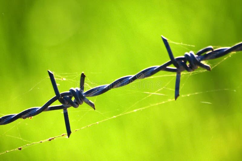 Försett med en hulling - trådstaket med spindelrengöringsduk royaltyfria foton