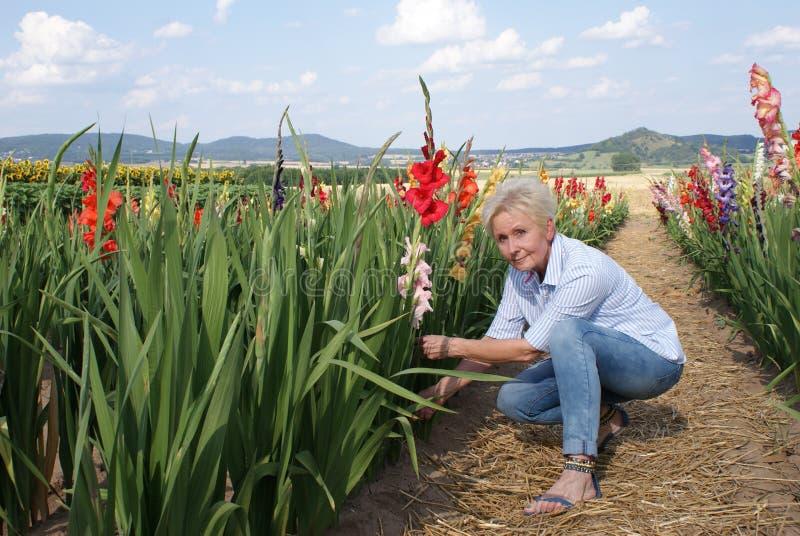 Försiktigt klipper denna unga kvinna av gladiolusen med en kniv arkivbild