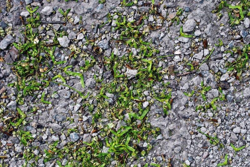 Försilvra lönnblommor på gråa krossade stenar, bakgrundstextur royaltyfria foton