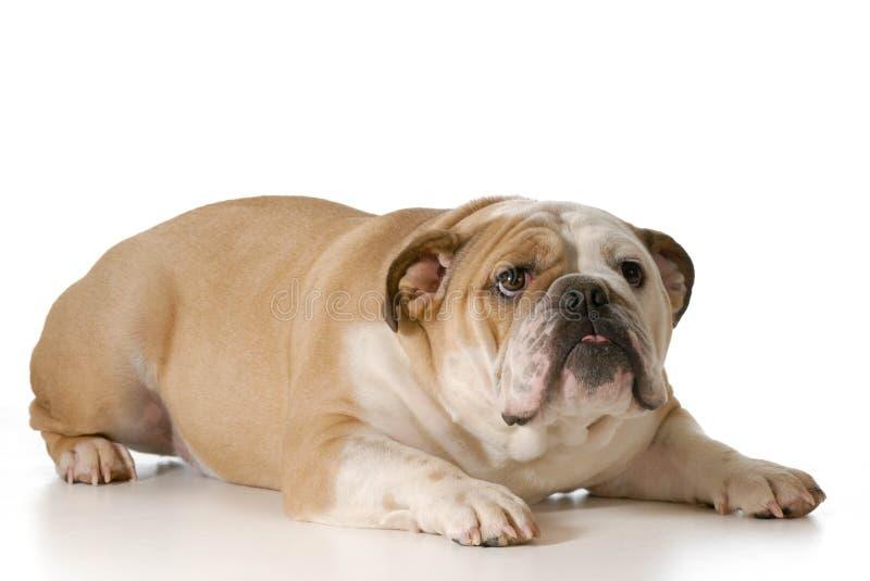 Förskräckt eller nervös hund royaltyfria foton