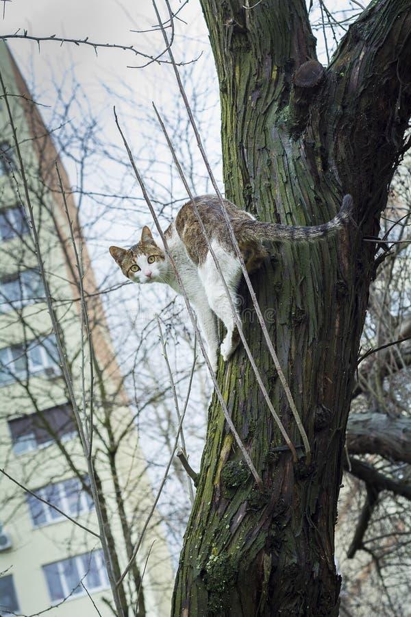 Förskräckt katt i ett träd nära en byggnad fotografering för bildbyråer