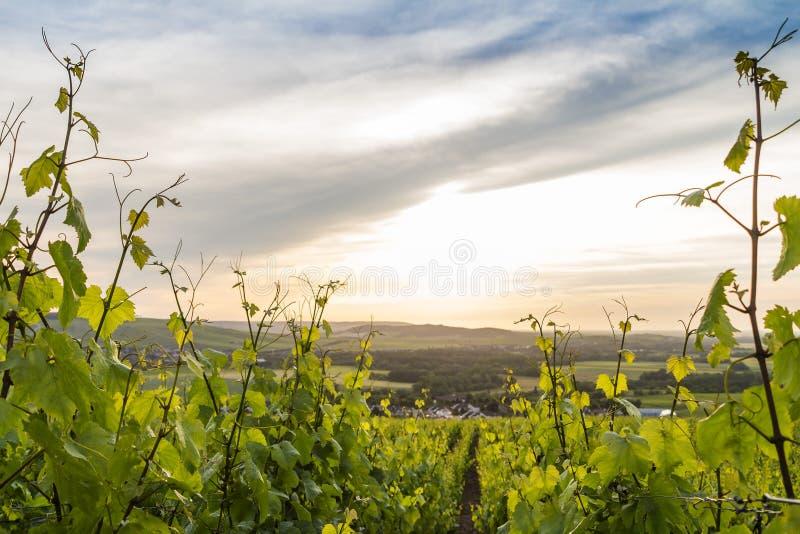 Försommarlandskap i Champagne, Frankrike royaltyfri foto