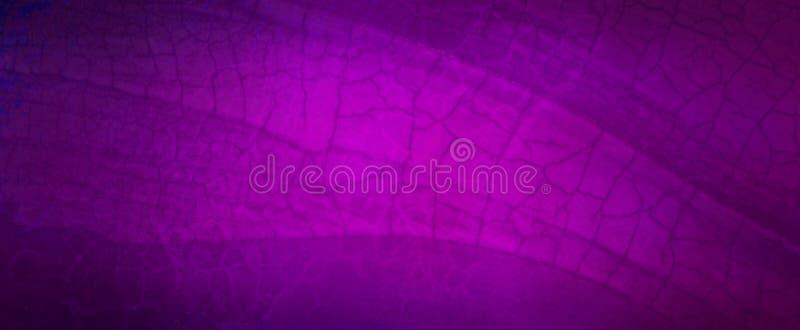 Förspänd, lila bakgrund med sprickor, grus konsistens, sprickor och skrynklat, lila papper royaltyfria foton