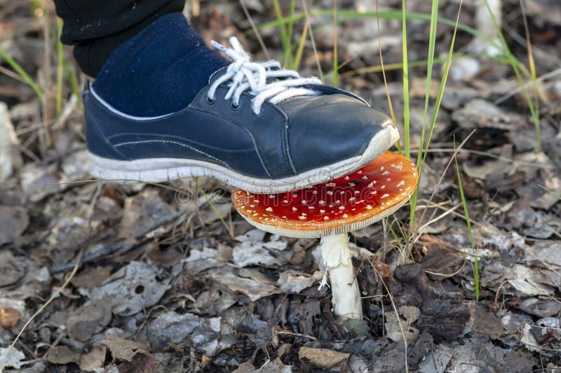 Förstör inte de röda flugsvamparna royaltyfri fotografi