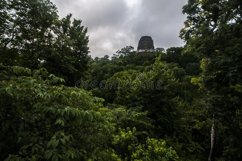 Förstörd tempel överst av djungeln royaltyfri fotografi