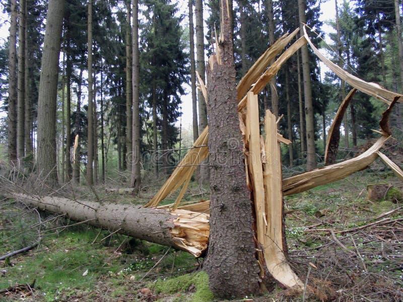 förstörd tree royaltyfria foton