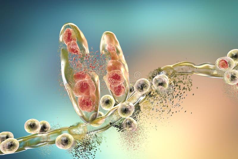 Förstörelse av Trichophytonsvampen stock illustrationer