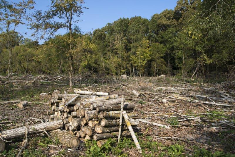 Förstörelse för miljö- skada för skogsavverkning av skogen royaltyfri foto