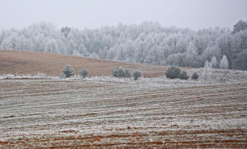 Första frost av säsongen royaltyfri fotografi