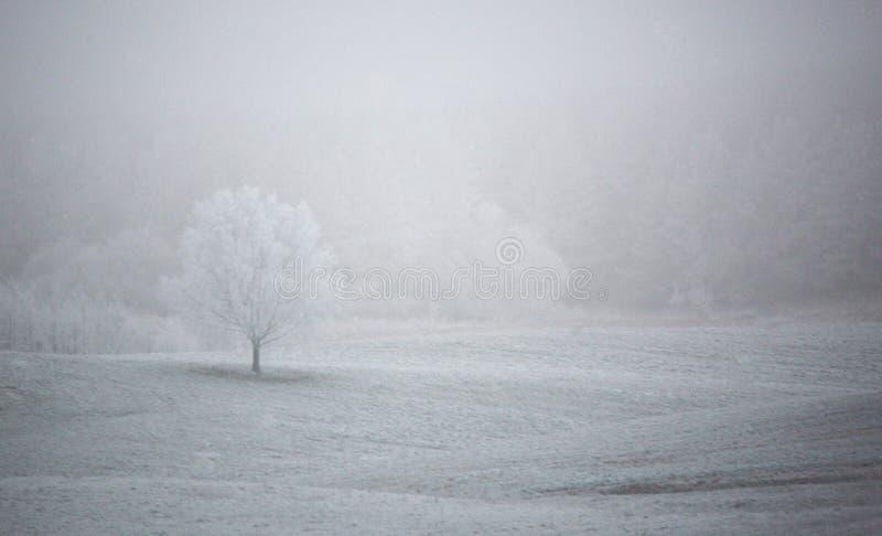 Första frost av säsongen arkivbilder