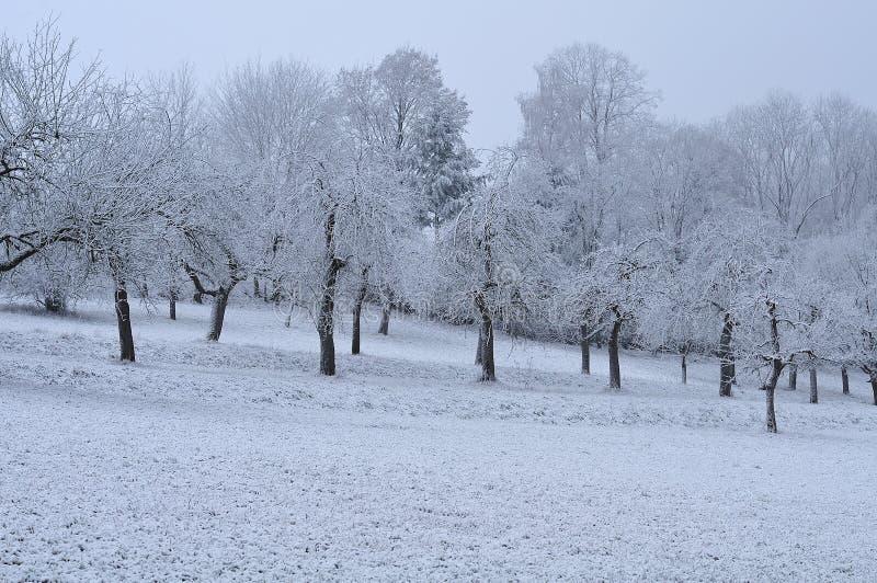 Första frost i fruktträdgård på den dimmiga november morgonen arkivfoto