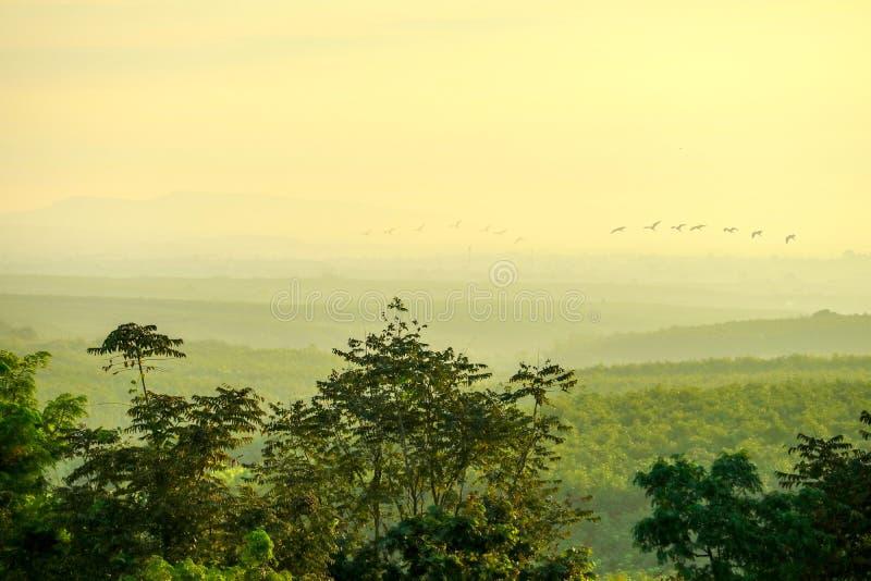 första ljus av soluppgång på skogkullen i lantliga och silhoueiiefåglar som flyger i morgon vektor illustrationer