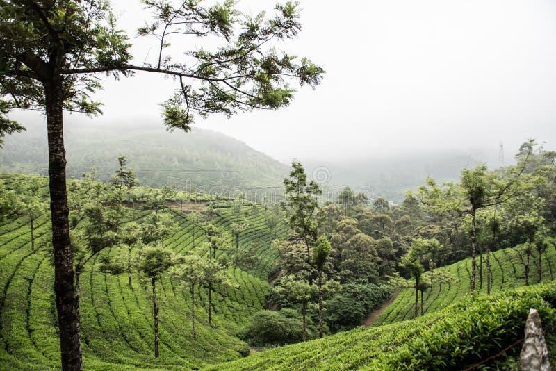 Första nationalpark i Kerala royaltyfri fotografi