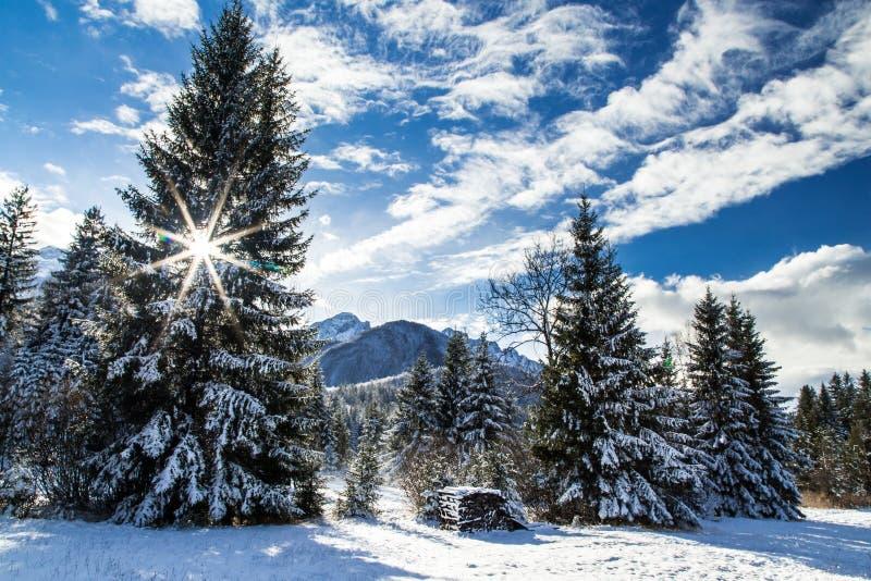 Första snö på berget royaltyfria foton