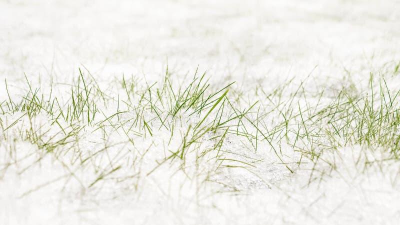 första snow för bakgrund Vit och gräsplan i natur Vit snö som ligger på grönt gräs royaltyfri fotografi