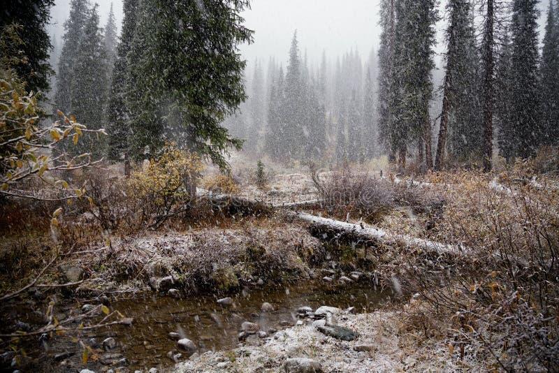 Första Snowfall royaltyfria foton