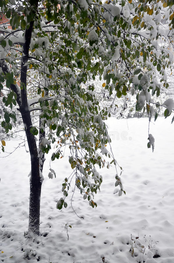 Första vita snö på gräsplan leaves_2 arkivbilder