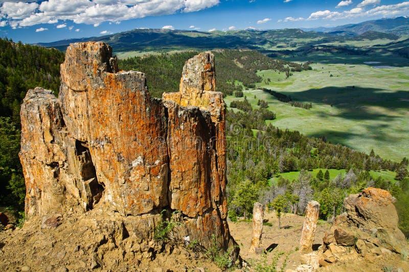 Förstenad skog, Yellowstone arkivfoton