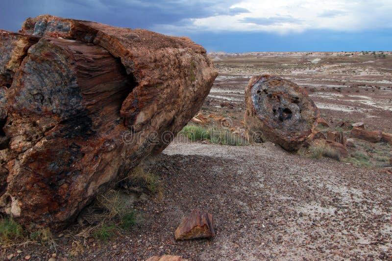 Förstenat stenträ loggar in förstenade Forest National Park, Arizona, USA royaltyfria bilder