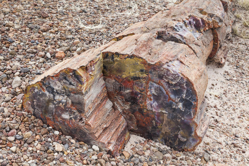 Förstenat trä arkivfoto