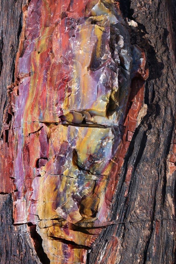 Förstenat trä royaltyfri bild