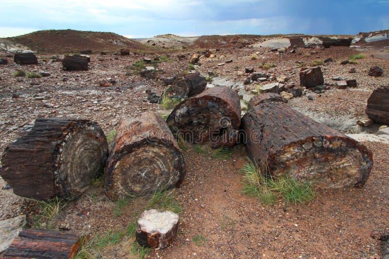 Förstenat trä längs Crystal Forest som fotvandrar slingan i förstenade Forest National Park, Arizona, USA arkivbilder