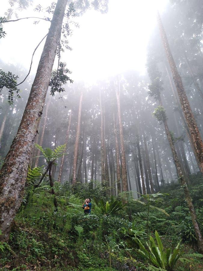 Förtätade tropiska skogar och fyllda med djur royaltyfri foto